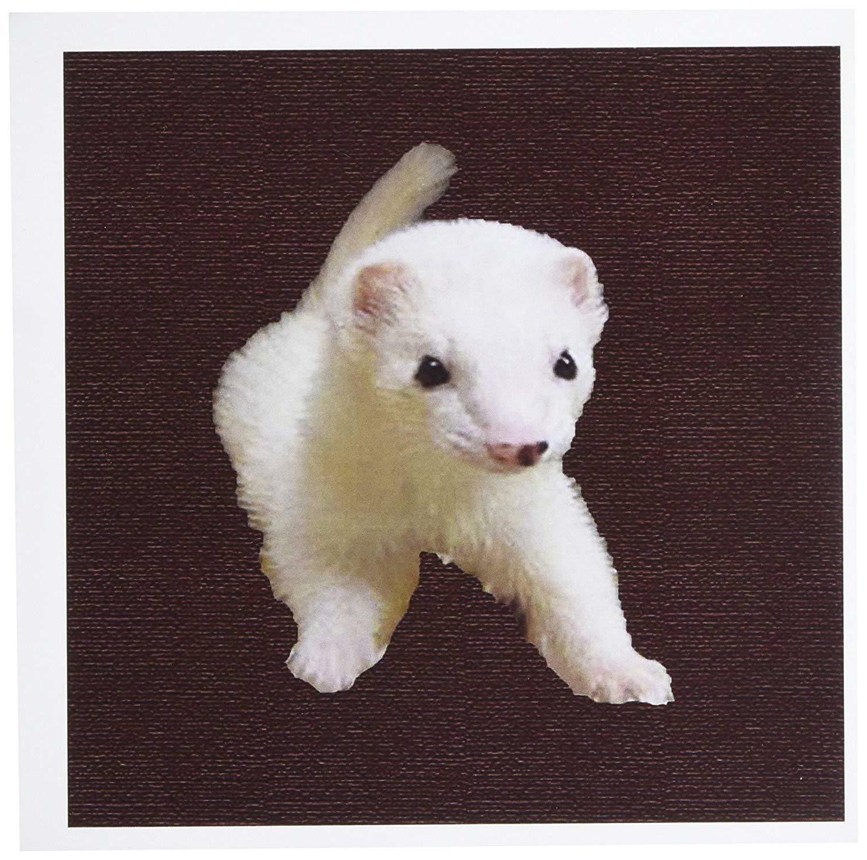 baby albino ferret greeting cards 6 x
