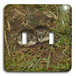 3dRose lsp_7347_2 Baby Burrow Owl Double Toggle Switch